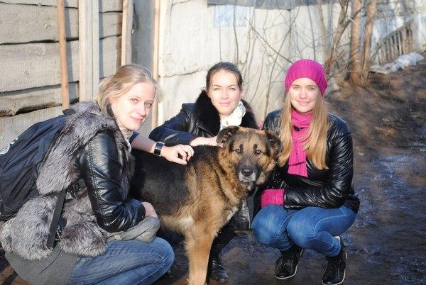 Приют для собак Альма