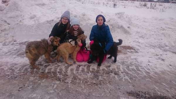 Приют для собак ГАВ