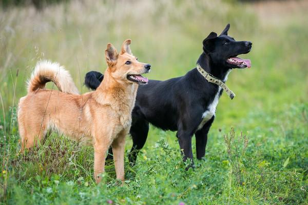 Приют для собак «Хвостатый рай»