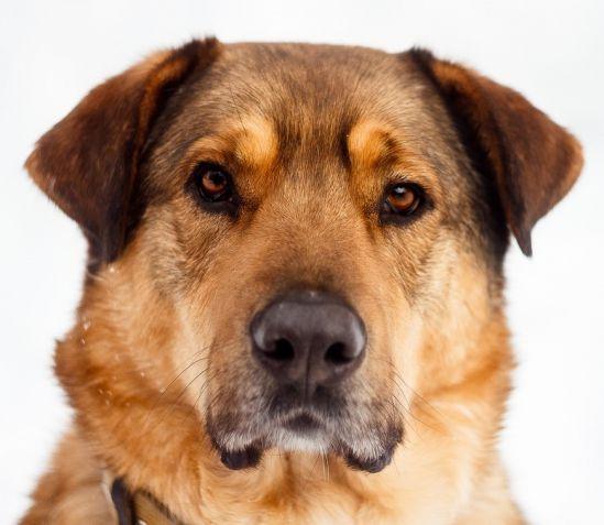 Приют для собак Красная сосна