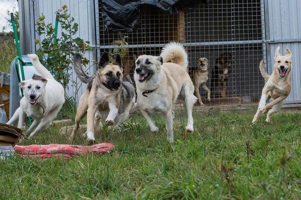 Благотворительный частный приют для кошек и собак Верные друзья