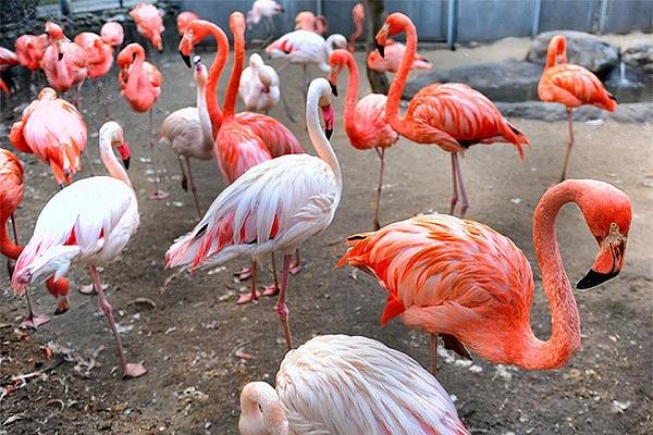 «Пернатая неделя» в Московском зоопарке
