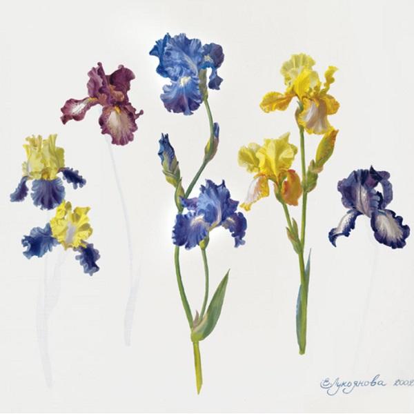 Выставка работ Екатерины Лукьяновой «О цветах и не только»