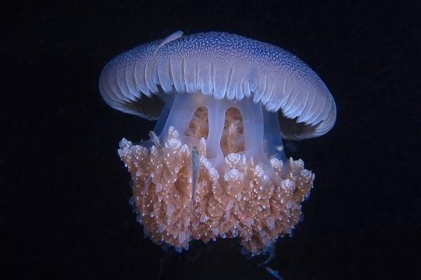 Фестиваль фотографии «Дикий подводный мир»
