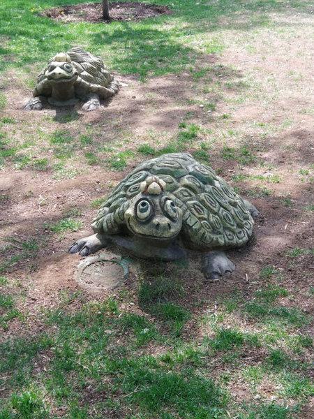 Черепашки в Пресненском детском парке