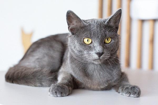 Выставка-пристройство кошек из приюта «Юна»