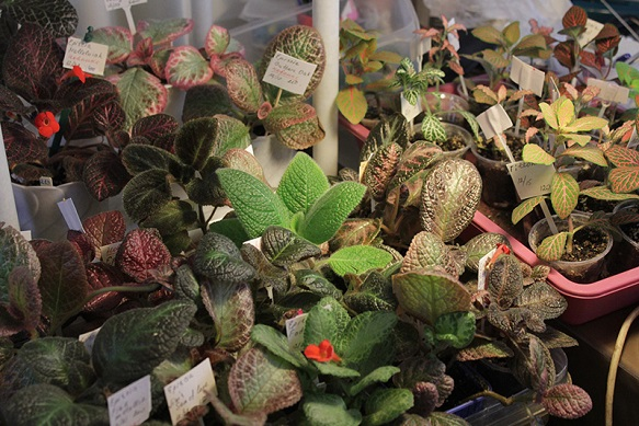 Выставка «Комнатные растения» в Тимирязевском музее