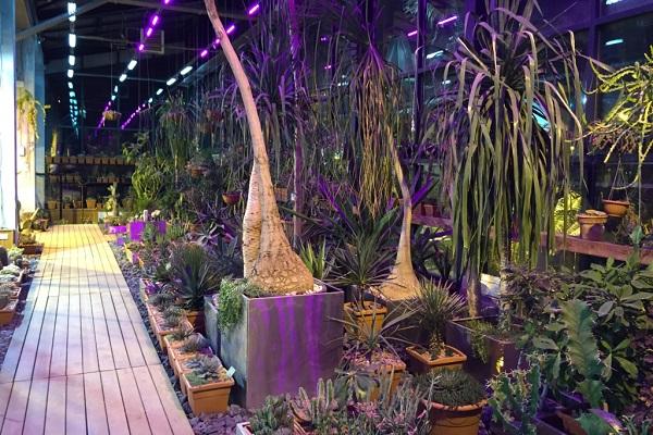 Редкие тропические орхидеи в «Аптекарском огороде»