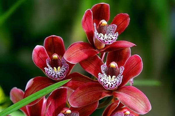 Выставка «Орхидеи»