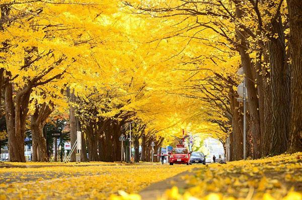 Онлайн-экскурсия «Золотой маршрут по Токио»