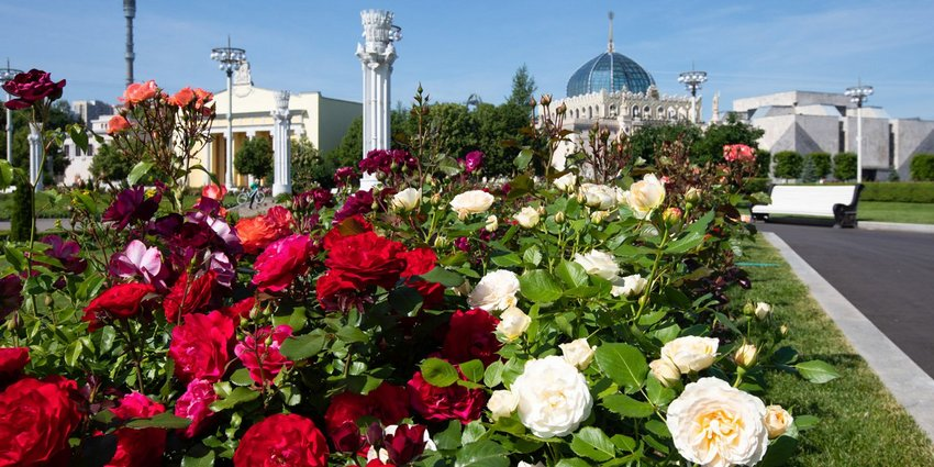 Фестиваль цветов на ВДНХ: прикоснись к флористическому искусству!