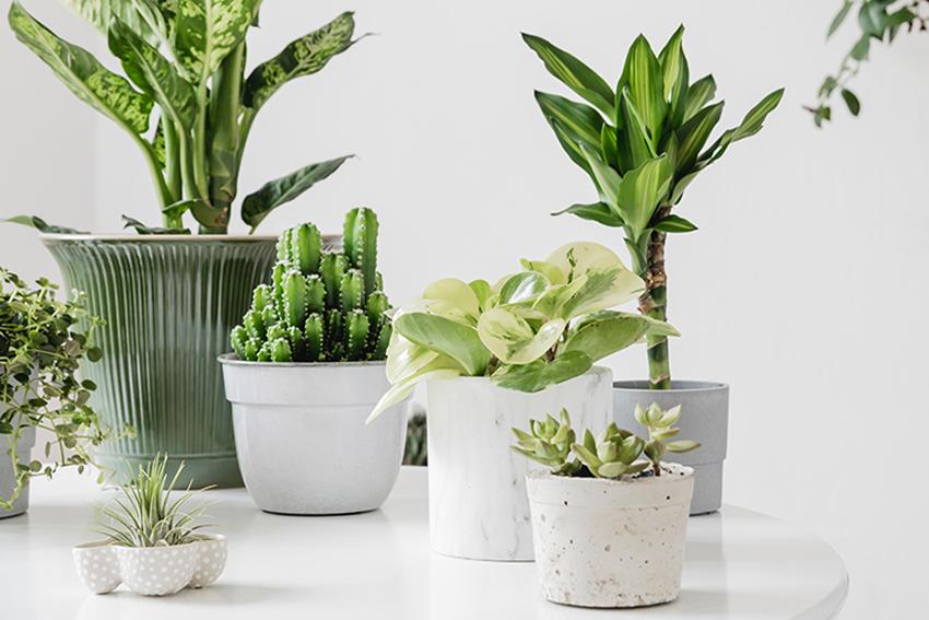 Выставка «Комнатные растения»