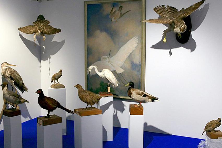 Выставка «Соколиная охота. Царская потеха с ловчими птицами»