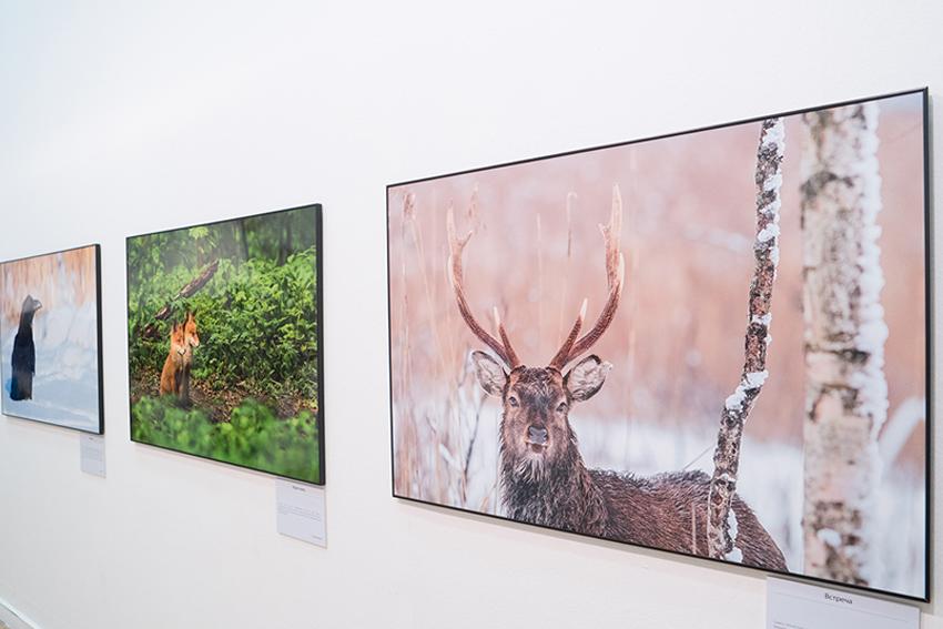 XIV Международный фестиваль дикой природы «Золотая Черепаха»
