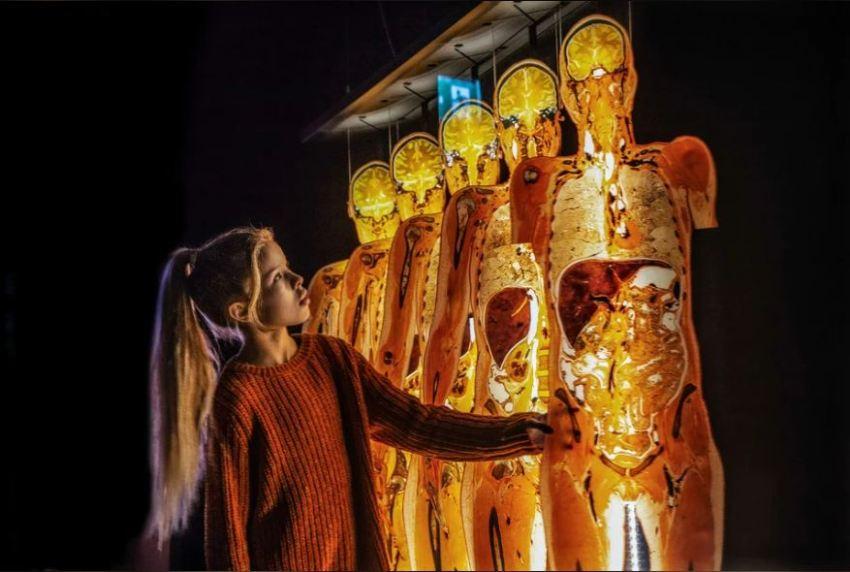 Выставка «Мир тела»