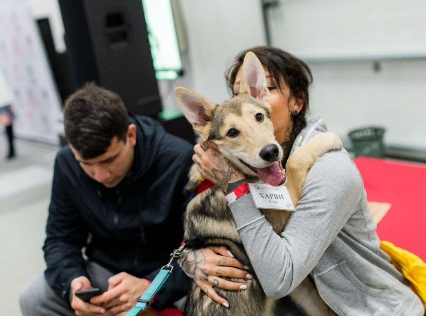 Благотворительный фестиваль «Собаки, которые любят»