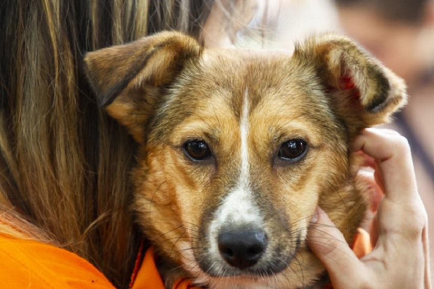 Фестиваль животных из приютов от фонда Ohana