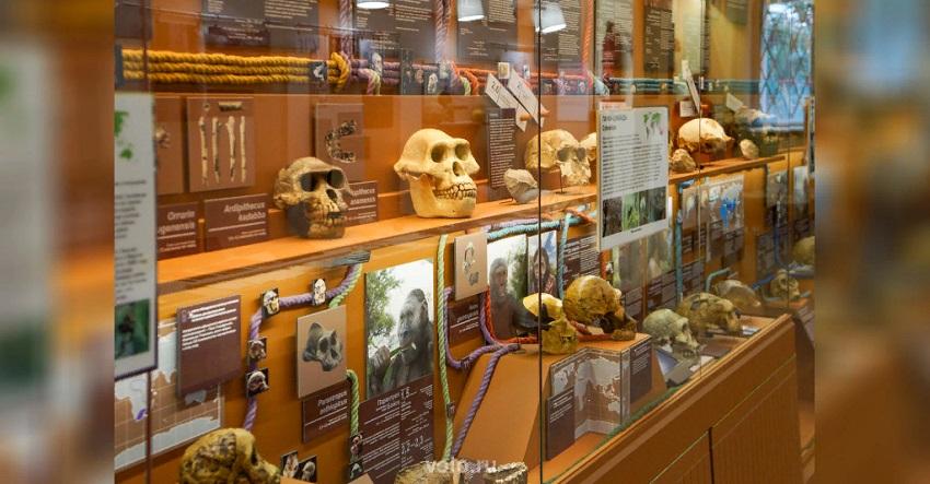 Выставка «1:100 или 100:1. Макеты и модели в Биологическом музее»