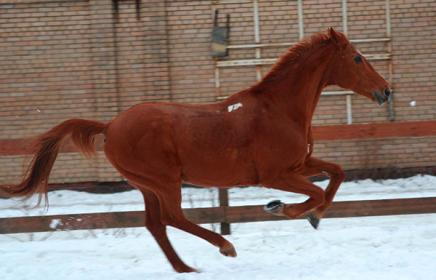 Где в Москве покататься на лошадях?