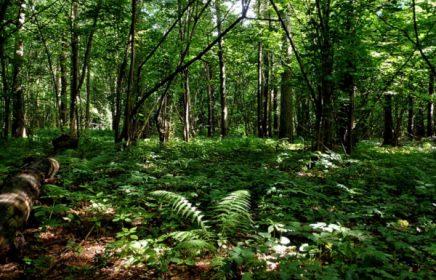 Алешкинский лес — живописный парк