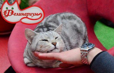 Интерактивная выставка кошек «Фелинариум»