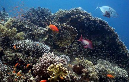 Научно-познавательный центр «Коралловый риф»