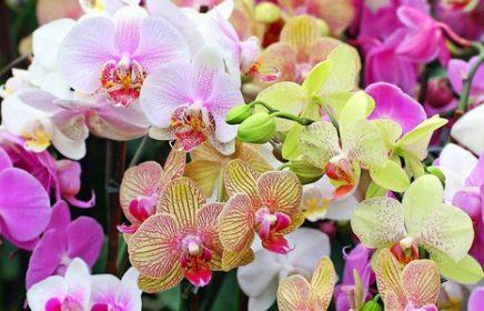 Фестиваль орхидей и хищных растений в «Аптекарском огороде»