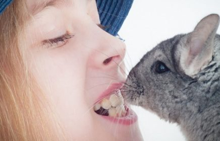 Контактный зоопарк ручных животных «Зверюшки как игрушки»